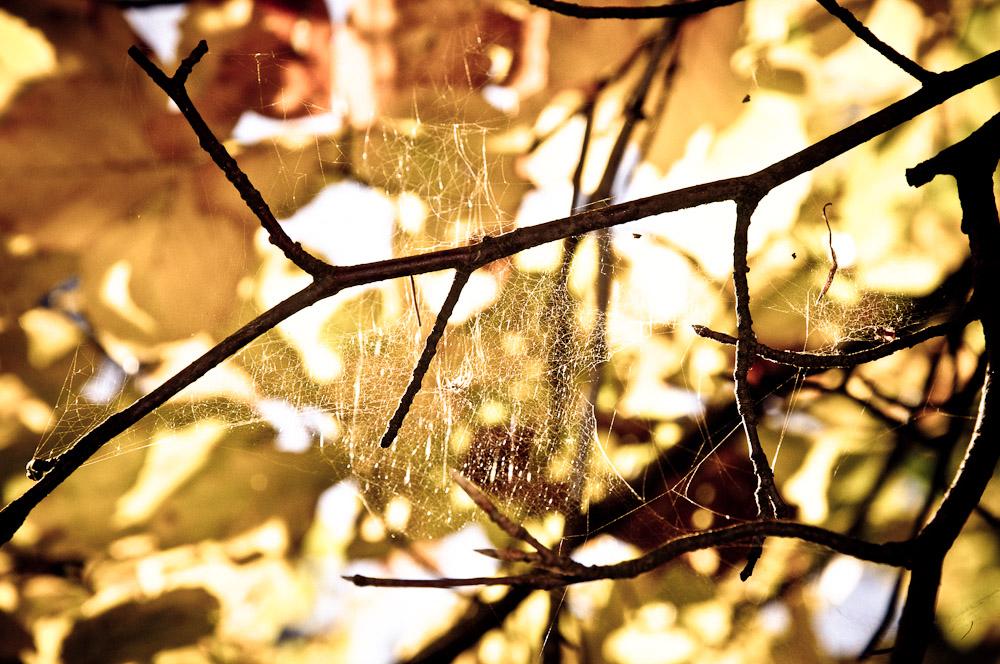 taunus-fuchstanz-spinnennetz-baum