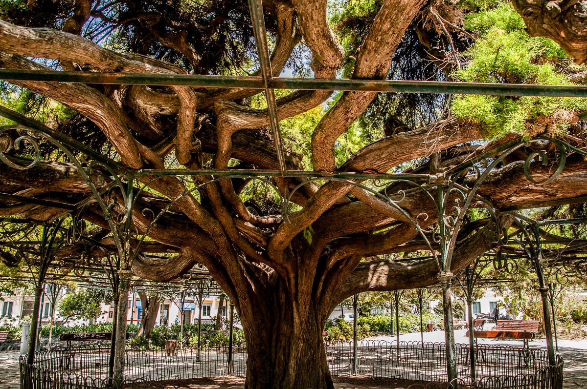 lissabon-portugal-baum-park